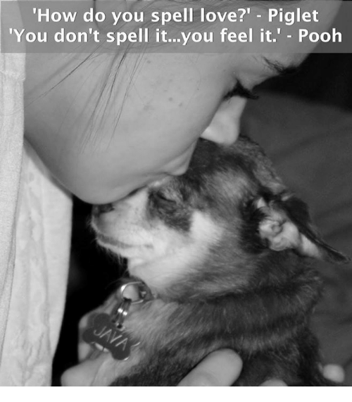 """piglets: How do you spell love?"""" Piglet  'You don't spell it...you feel it.  Pooh"""