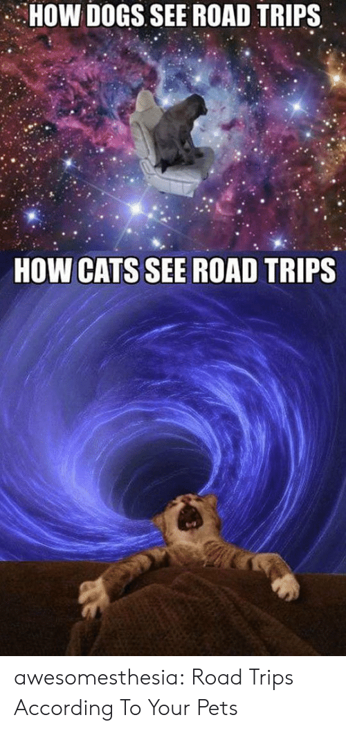 Cats, Dogs, and Tumblr: HOW DOGS SEE ROAD TRIPS  HOW CATS SEE ROAD TRIPS awesomesthesia:  Road Trips According To Your Pets