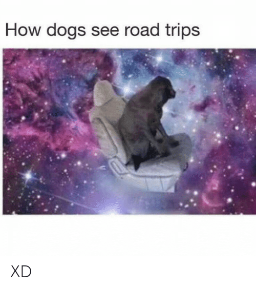 Dogs, How, and Trips: How dogs see road trips XD