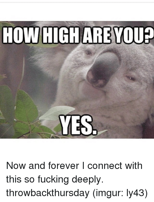 How High Are You Yes Now And Forever I Connect With This So Fucking