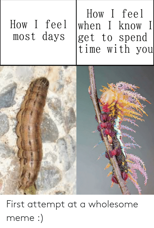 days: How I feel  How I feel when I know I  most days |get to spend  time with you First attempt at a wholesome meme :)