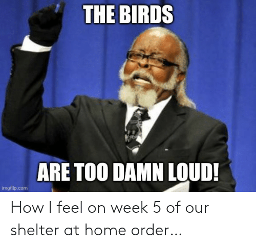 How I Feel: How I feel on week 5 of our shelter at home order…