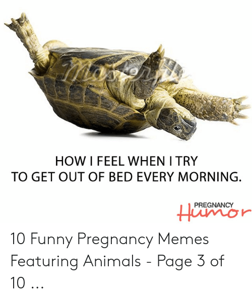 Funny Pregnancy Memes: HOW I FEEL WHEN I TRY  TO GET OUT OF BED EVERY MORNING.  PREGNANCY 10 Funny Pregnancy Memes Featuring Animals - Page 3 of 10 ...