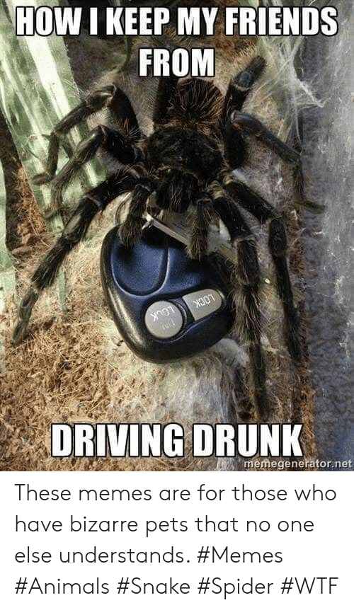 Memes Are: HOW I KEEP MY FRIENDS  FROM  LOCK  LOCK  memegenerator.net  DRIVING DRUNK These memes are for those who have bizarre pets that no one else understands. #Memes #Animals #Snake #Spider #WTF