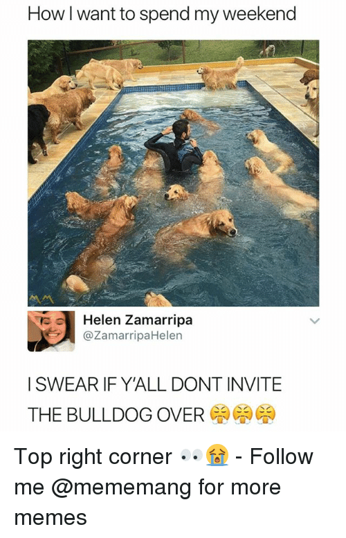 My Weekend: How I want to spend my weekend  Helen Zamarripa  @ZamarripaHelen  I SWEAR IF Y'ALL DONT INVITE  THE BULLDOG OVER Top right corner 👀😭 - Follow me @mememang for more memes