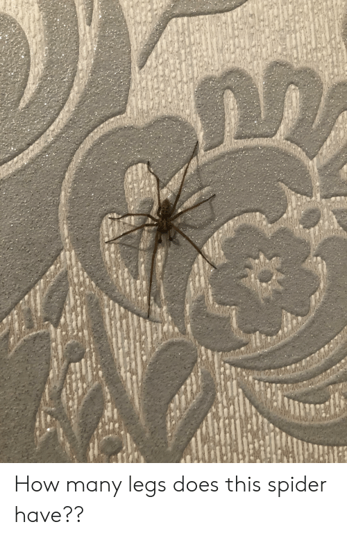 Spider, How, and This: How many legs does this spider have??