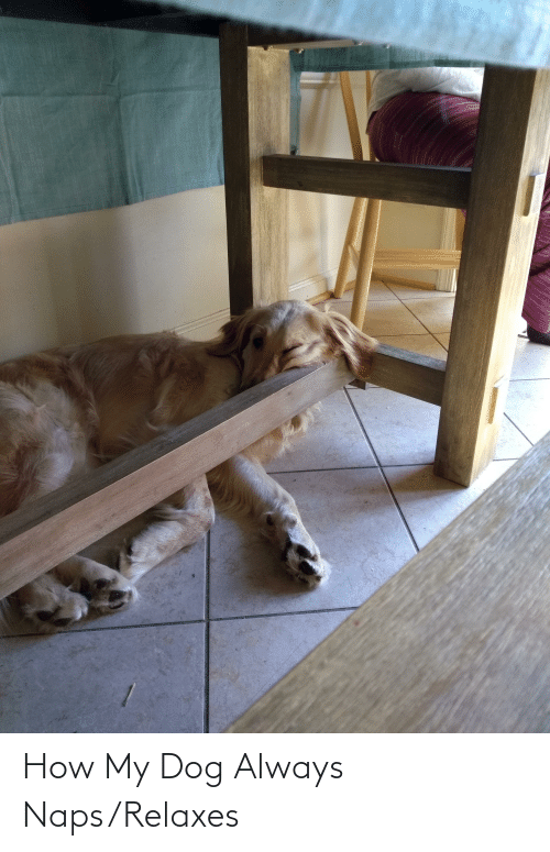 How, Dog, and Always: How My Dog Always Naps/Relaxes