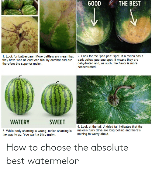 choose: How to choose the absolute best watermelon