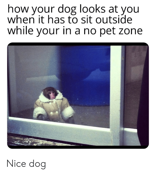 Funny, Nice, and How: how your dog looks at you  when it has to sit outside  while your in a no pet zone Nice dog