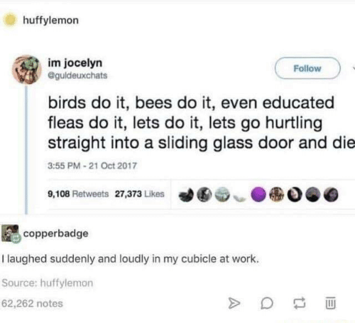 Funny, Tumblr, and Work: huffylemorn  im jocelyn  Follow  @guldeuxchats  birds do it, bees do it, even educated  fleas do it, lets do it, lets go hurtling  straight into a sliding glass door and die  3:55 PM 21 Oct 2017  ●  9,108 Retweets 27,373 Likes  ︶  copperbadge  I laughed suddenly and loudly in my cubicle at work.  Source: huffylemon  62,262 notes