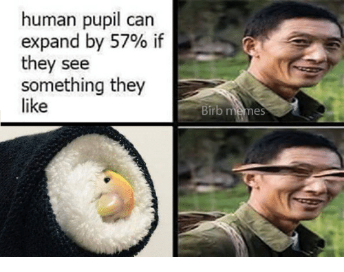 humanism: human pupil can  expand by 57% if  they see  something they  like  Birb memes
