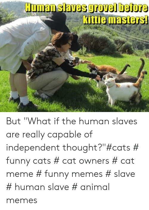 """funny cats: Human slaves grovel before  Kittie masters But """"What if the human slaves are really capable of independent thought?""""#cats # funny cats # cat owners # cat meme # funny memes # slave # human slave # animal memes"""