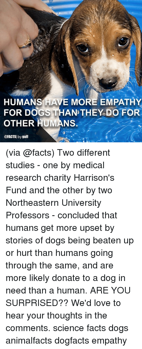 guff: HUMANS HAVE MORE EMPATHY  FOR DOGS THAN THEY DO FOR  OTHER HUMANS.  @FACTSI by guff (via @facts) Two different studies - one by medical research charity Harrison's Fund and the other by two Northeastern University Professors - concluded that humans get more upset by stories of dogs being beaten up or hurt than humans going through the same, and are more likely donate to a dog in need than a human. ARE YOU SURPRISED?? We'd love to hear your thoughts in the comments. science facts dogs animalfacts dogfacts empathy