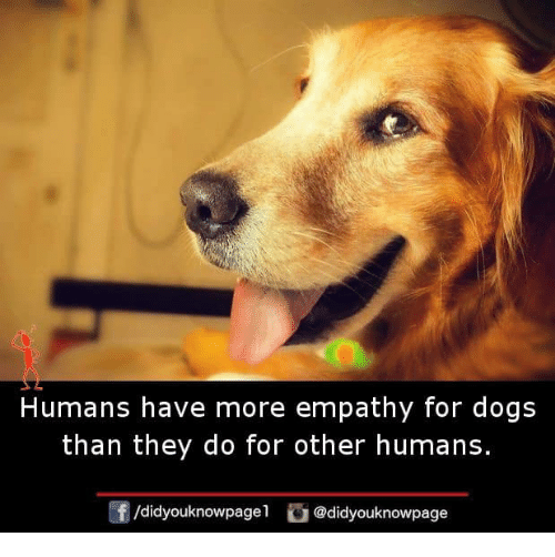 Empathy: Humans have more empathy for dogs  than they do for other humans  f/didyouknowpagel@didyouknowpage