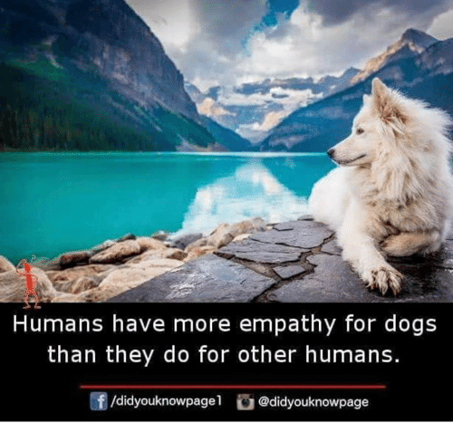 Empathy: Humans have more empathy for dogs  than they do for other humans.  /didyouknowpagel@didyouknowpage