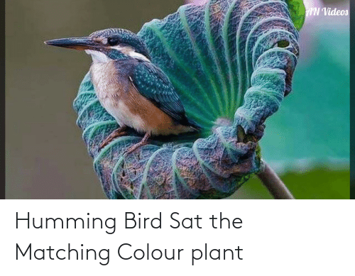 Colour: Humming Bird Sat the Matching Colour plant