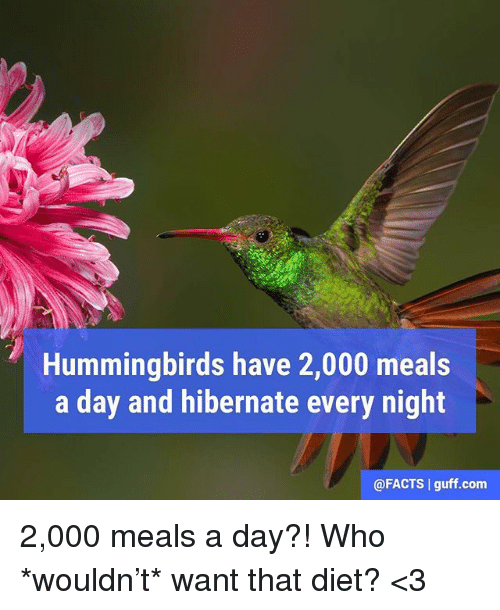 guff: Hummingbirds have 2,000 meals  a day and hibernate every night  @FACTS guff com 2,000 meals a day?! Who *wouldn't* want that diet? <3