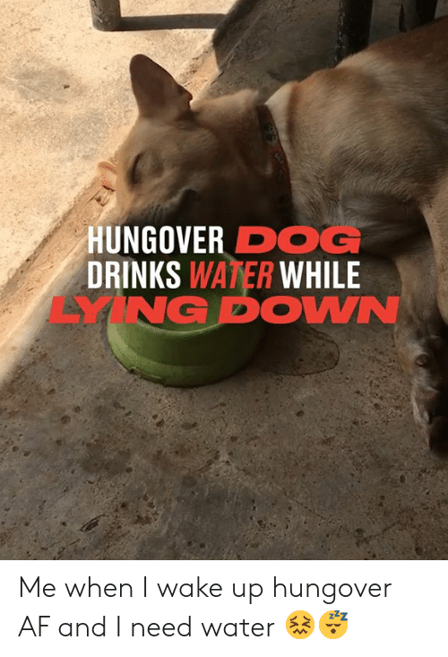 When I Wake Up: HUNGOVER DOG  DRINKS WATER WHILE  YNG DOWN Me when I wake up hungover AF and I need water 😖😴