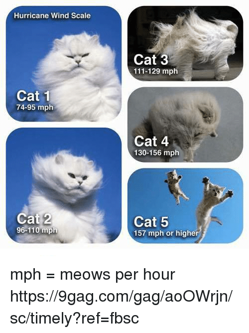 gagged: Hurricane Wind Scale  Cat 3  111-129 mph  Cat 1  74-95 mplh  Cat 4  130-156 mph  Cat 2  96-110 mph  Cat 5  157 mph or higher mph = meows per hour https://9gag.com/gag/aoOWrjn/sc/timely?ref=fbsc