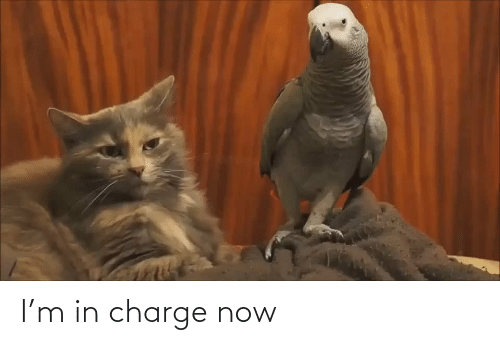 charge: I'm in charge now
