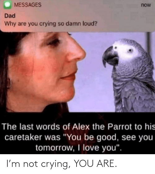 You Are: I'm not crying, YOU ARE.