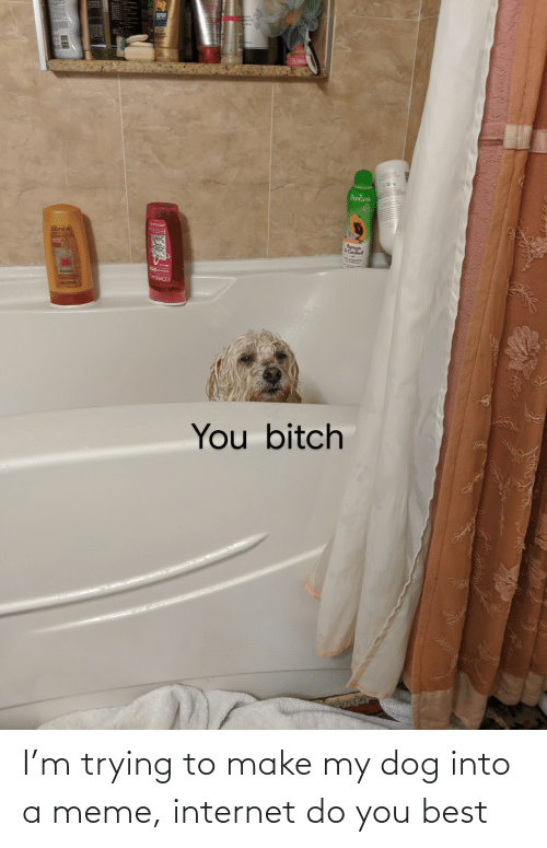 M: I'm trying to make my dog into a meme, internet do you best