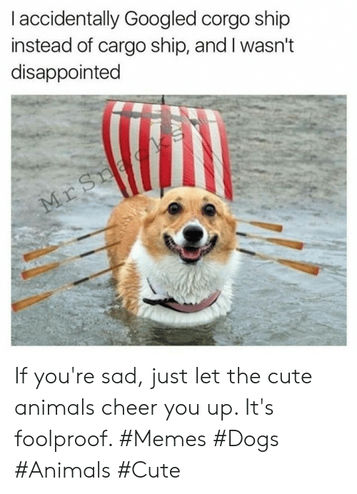Disappointed: I accidentally Googled corgo ship  instead of cargo ship, and I wasn't  disappointed  Mr Sna If you're sad, just let the cute animals cheer you up. It's foolproof. #Memes #Dogs #Animals #Cute