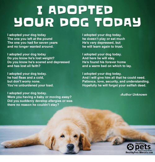 Love, Memes, and Lost: I ADOPTED  JOUR DOG TODAy  I adopted your dog today  The one you left at the pound  The one you had for seven years  and no longer wanted around.  I adopted your dog today.  he doesn't play or eat much  He's very depressed, but  he will learn again to trust.  I adopted your dog today  Do you know he's lost weight?  Do you know he's scared and depressed  and has lost all faith?  I adopted your dog today.  And here he will stay.  He's found his forever home  and a warm bed on which to lay.  I adopted your dog today.  he had fleas and a cold  but don't worry none.  You've unburdened your load.  I adopted your dog today.  And I will give him all that he could need.  Patience, love, security, and understanding.  Hopefully he will forget your selfish deed.  I adopted your dog today.  Were you having a baby or moving away?  Did you suddenly develop allergies or was  there no reason he couldn't stay?  -Author Unknown  pets  Healthy  HealthyPets.Mercola.com