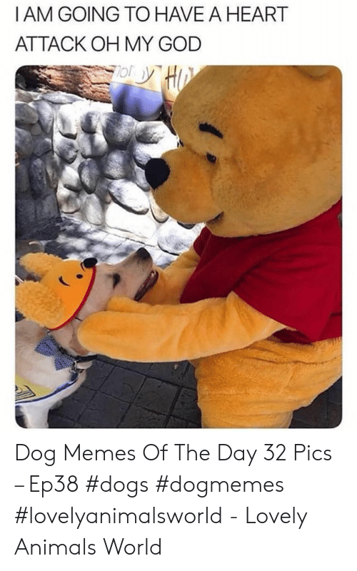 Animals, Dogs, and God: I AM GOING TO HAVEAHEART  ATTACK OH MY GOD Dog Memes Of The Day 32 Pics – Ep38 #dogs #dogmemes #lovelyanimalsworld - Lovely Animals World