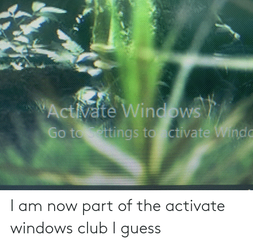 Activate Windows: I am now part of the activate windows club I guess