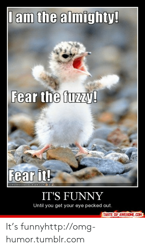 Fear It: I am the almighty!  Fear the fuzzy!  Fear it!  RGER.COM 3  ICANHASCHEEZE  IT'S FUNNY  Until you get your eye pecked out.  TASTE OF AWESOME.COM It's funnyhttp://omg-humor.tumblr.com