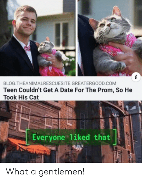 prom: i  BLOG.THEANIMALRESCUESITE.GREATERGOOD.COM  Teen Couldn't Get A Date For The Prom, So He  Took His Cat  Everyone liked that  240  Frealfeeling What a gentlemen!