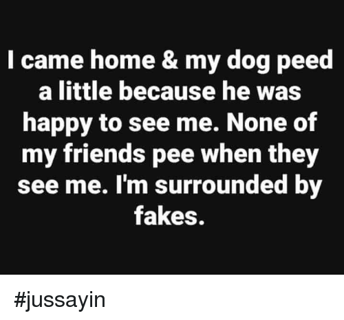 Jussayin: I came home & my dog peed  a little because he was  happy to see me. None of  my friends pee when they  see me. I'm surrounded by  fakes. #jussayin