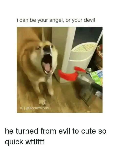 To Cute: i can be your angel, or your devil  IGI@Biochemicals he turned from evil to cute so quick wtfffff