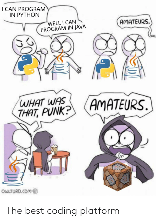 Owlturd: I CAN PROGRAM  IN PYTHON  'WELL I CAN  PROGRAM IN JAVA  AMATEURS.  WHAT WAS  THAT, PUNK?  (AMATEURS.  OWLTURD.COM The best coding platform