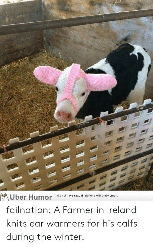 Tumblr, Uber, and Winter: I did not have sexual relations with that  Uber Humor  woman. failnation:  A Farmer in Ireland knits ear warmers for his calfs during the winter.