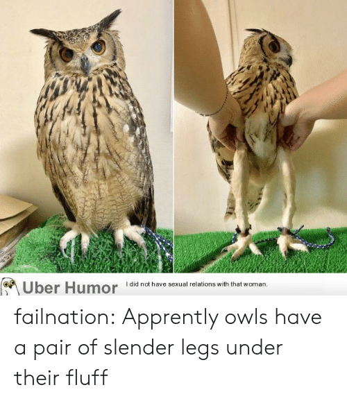Tumblr, Uber, and Blog: I did not have sexual relations with that woman.  Uber Humor failnation:  Apprently owls have a pair of slender legs under their fluff