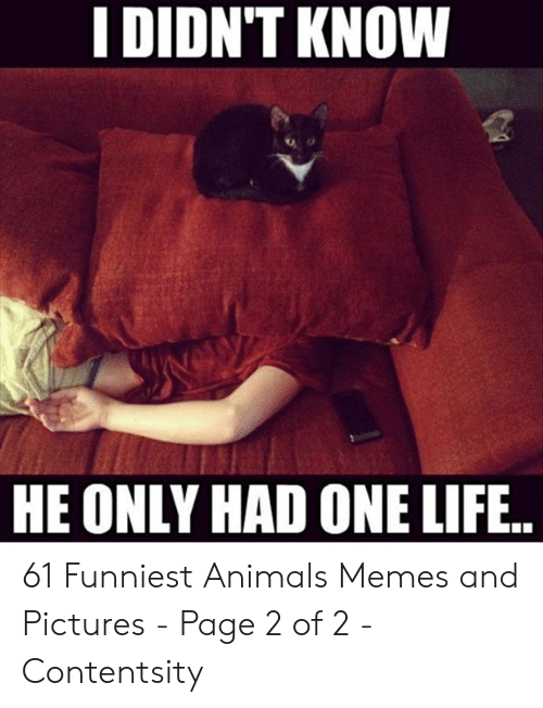 Animals Memes: I DIDN'T KNOW  HE ONLY HAD ONE LIFE.. 61 Funniest Animals Memes and Pictures - Page 2 of 2 - Contentsity