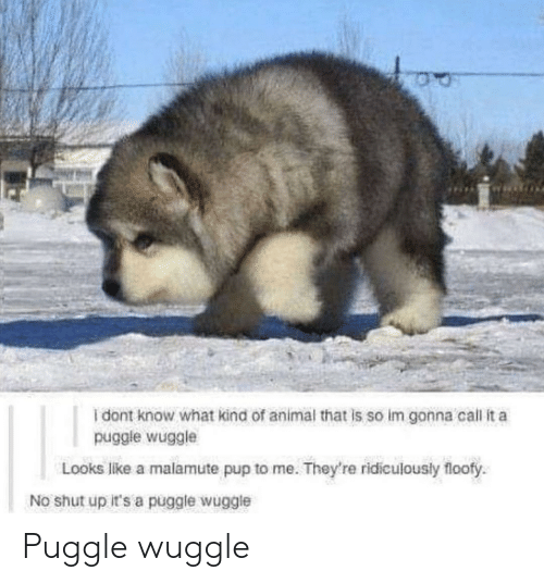 Shut Up, Animal, and Pup: I dont know what kind of animal that is so im gonna call it a  puggle wuggle  Looks like a malamute pup to me. They're ridiculously floofy  No shut up it's a puggle wuggle Puggle wuggle