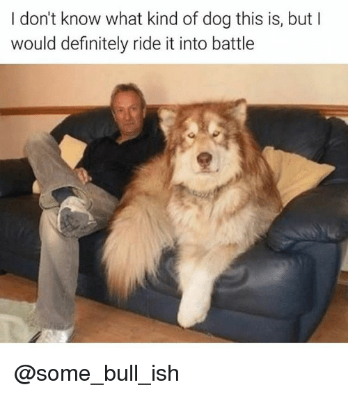 bulling: I don't know what kind of dog this is, but l  would definitely ride it into battle @some_bull_ish