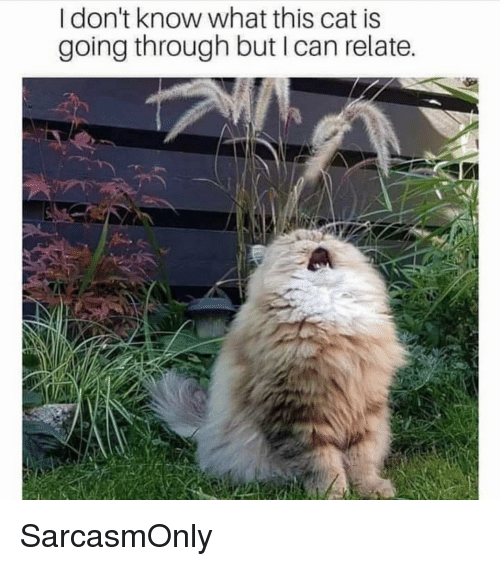 Funny, Memes, and Cat: I don't know what this cat is  going through but I can relate SarcasmOnly