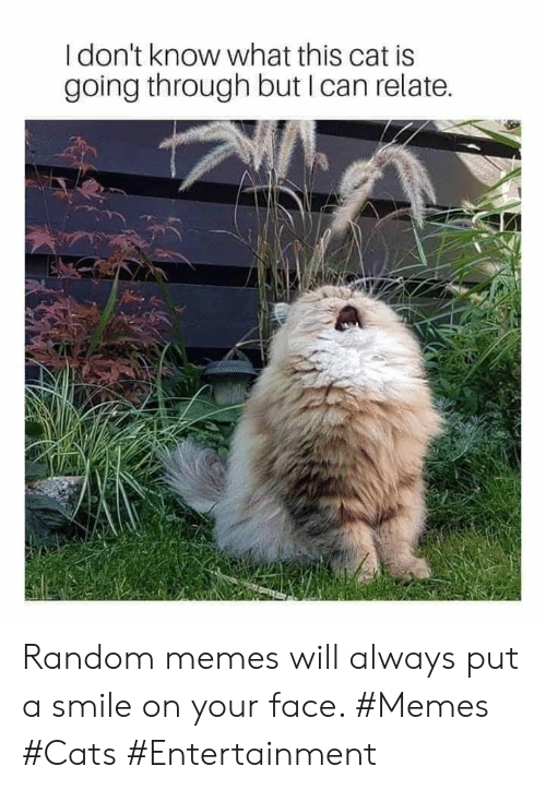 Cats, Memes, and Smile: I don't know what this cat is  going through but I can relate. Random memes will always put a smile on your face. #Memes #Cats #Entertainment