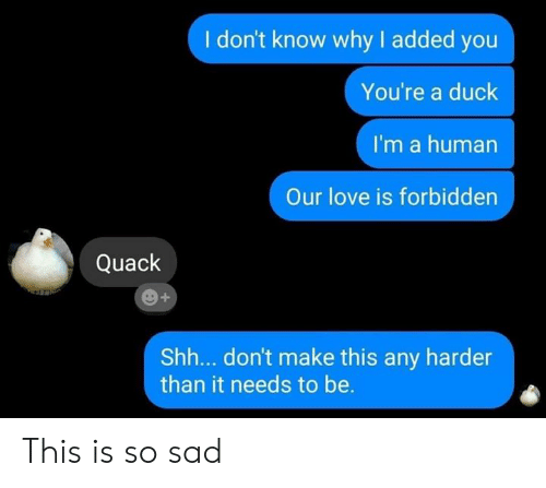 Love, Memes, and Duck: I don't know why I added you  You're a duck  I'm a human  Our love is forbidden  Quack  Shh... don't make this any harder  than it needs to be. This is so sad