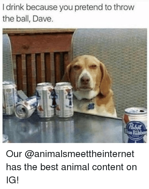 best animal: I drink because you pretend to throw  the ball, Dave. Our @animalsmeettheinternet has the best animal content on IG!