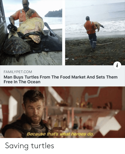 Buys: i  FAMILYPET.COM  Man Buys Turtles From The Food Market And Sets Them  Free In The Ocean  Because that's what heroes do. Saving turtles