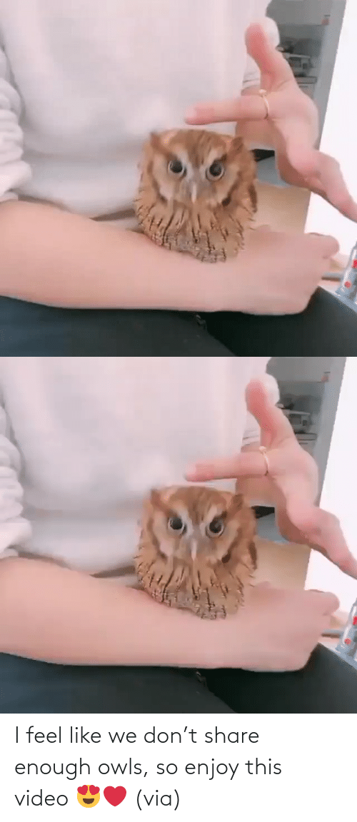 Video: I feel like we don't share enough owls, so enjoy this video 😍❤️ (via)