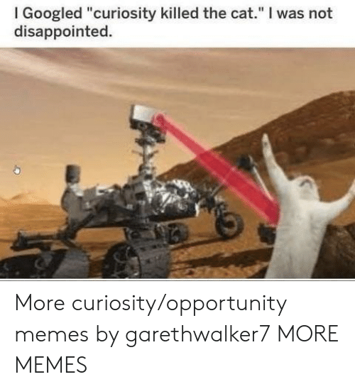 """Dank, Disappointed, and Memes: I Googled """"curiosity killed the cat."""" I was not  disappointed. More curiosity/opportunity memes by garethwalker7 MORE MEMES"""