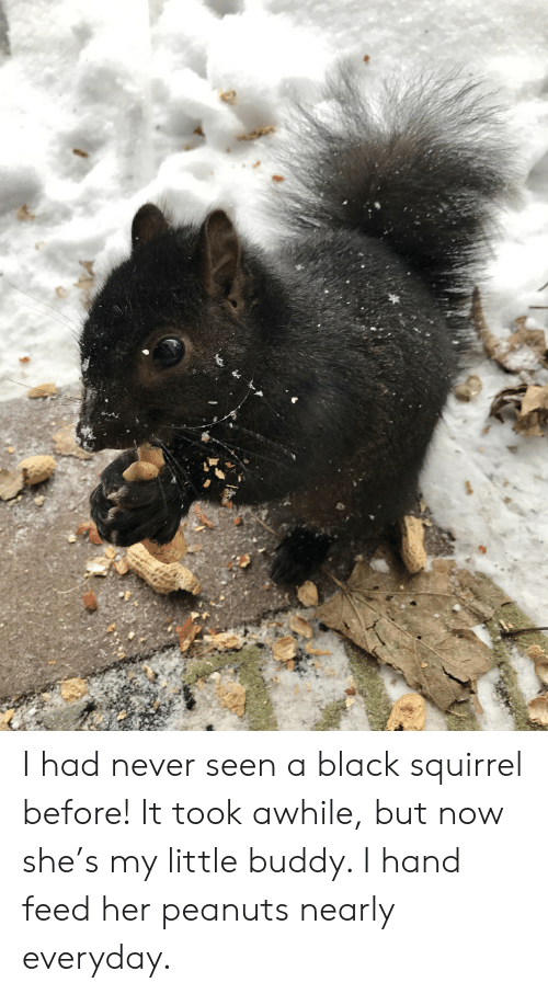 Black, Squirrel, and Never: I had never seen a black squirrel before! It took awhile, but now she's my little buddy. I hand feed her peanuts nearly everyday.