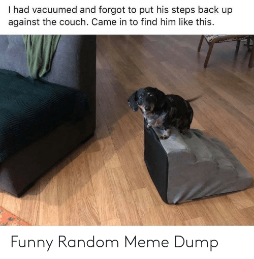 Funny, Meme, and Couch: I had vacuumed and forgot to put his steps back up  against the couch. Came in to find him like this. Funny Random Meme Dump