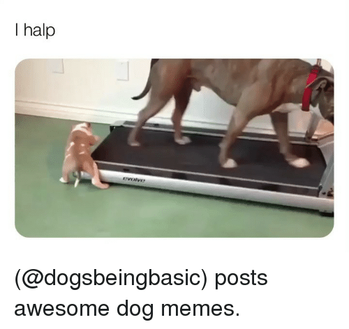 Halp: I halp (@dogsbeingbasic) posts awesome dog memes.